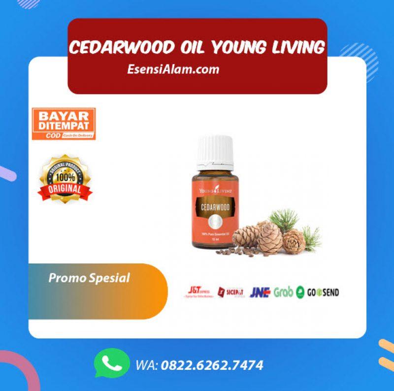 Cedarwood Young Living Oil, Fungsi, Kegunaan dan Manfaat