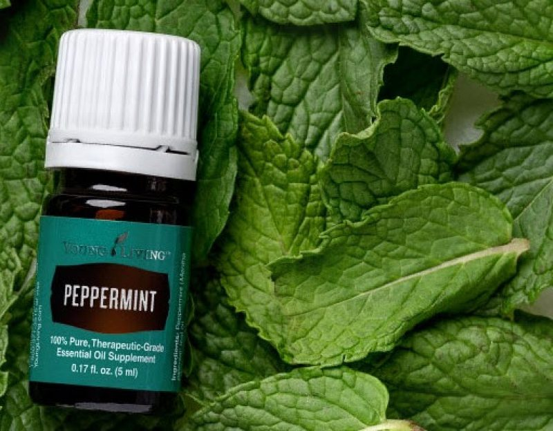 20 Manfaat dan Kegunaan Peppermint Essensial Oil